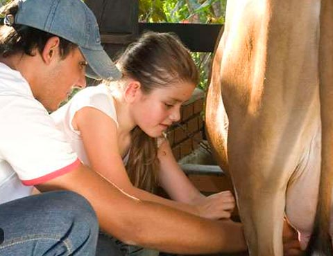 Monitor mostrando para menina adolescente como tirar leite da vaquinha na hora